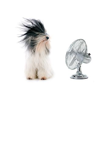 Dog with Fan 360x527